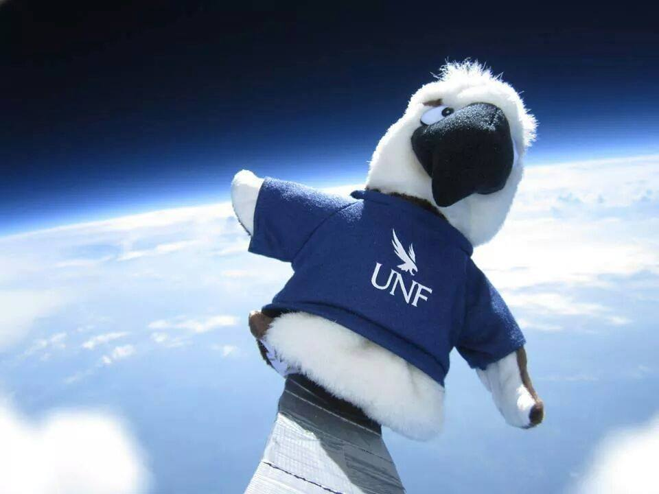 Ozzie Osprey in orbit