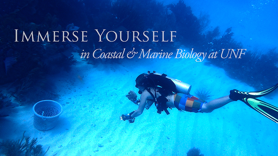 Coastal Immerse Yourself in Coastal & Marine Biology at UNF