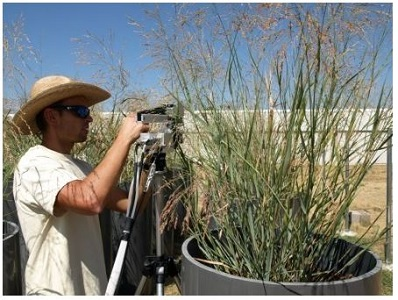 Mike Aspinwall working with switchgrass
