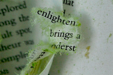 open book with torn pages saying enlightenment brings a-
