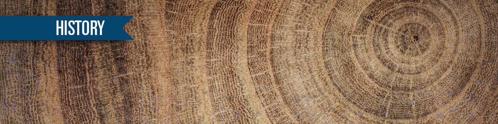 Tree Rings Cross section