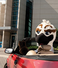 UNF's mascot Ozzie the Osprey sitting in a parked red convertible car