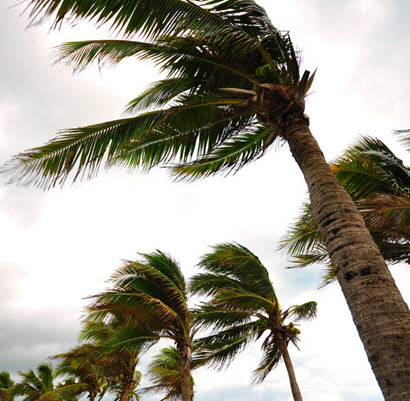 Palm trees swaying in stormy weather