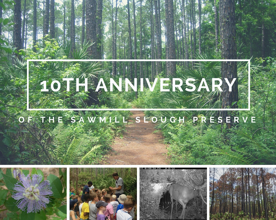10th anniversary of the Preserve collage