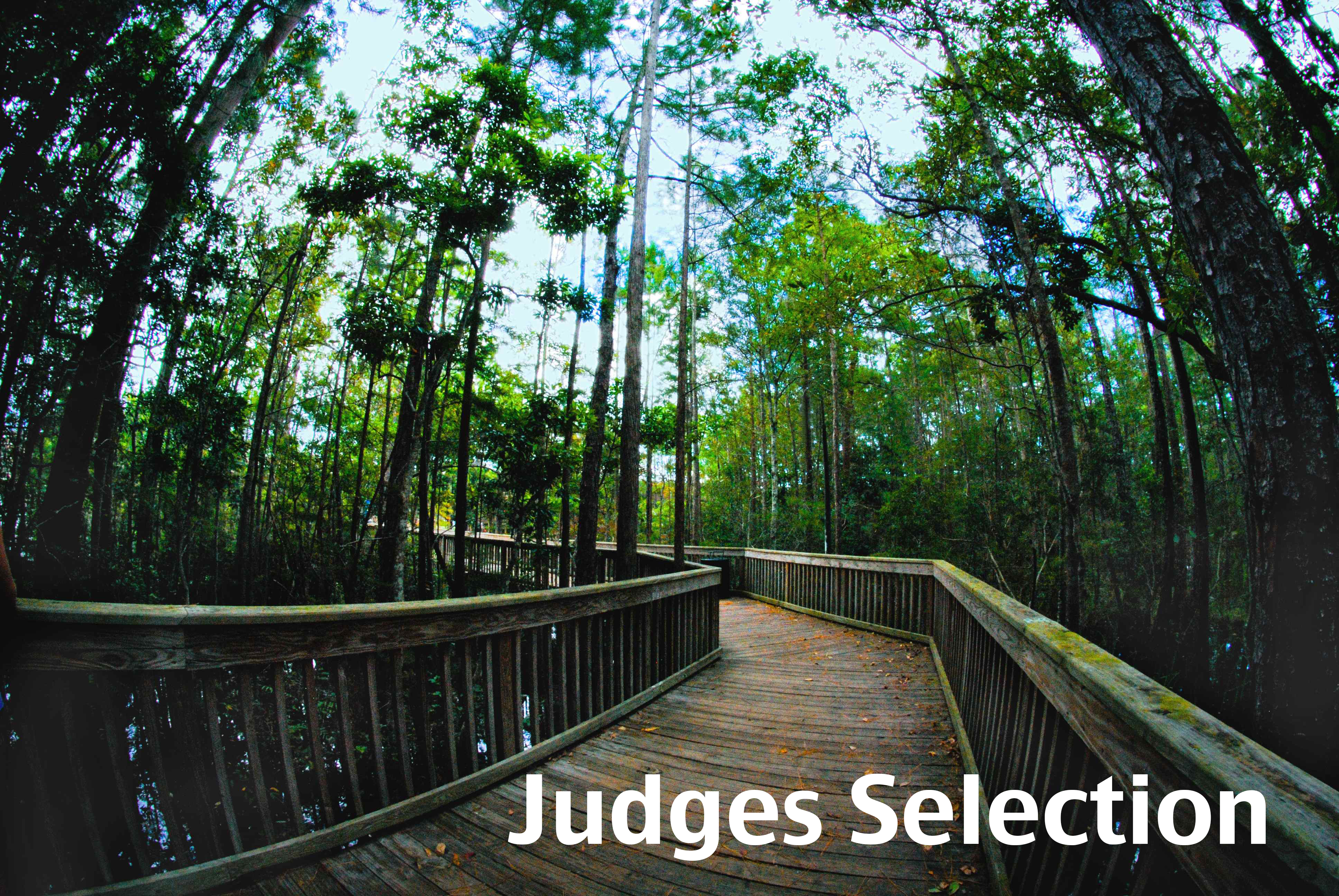 Judge's selection photo, boardwalk in housing