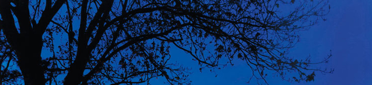 Tree at night BANNER