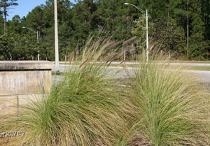 Greenery at entrance to UNF Hall (photo by Julie Williams)