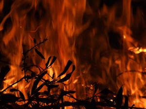 Controlled burns are a regular part of maintaining the health of trees on campus.