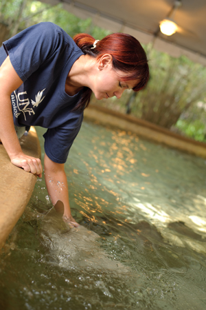 UNF biology student works with the stingrays in the new exhibit at the Jacksonville Zoo and Gardens.
