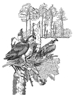 An illustration by Vernon Payne of Ozzie from the book