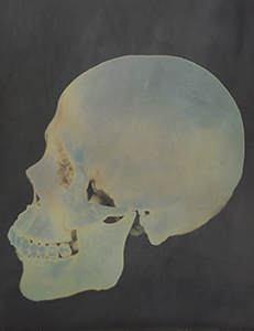 MOCA exhibit: Photo of skull by Adam Fuss, Untitled; image courtesy of Cheim & Read