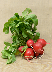 Radishes The Goods