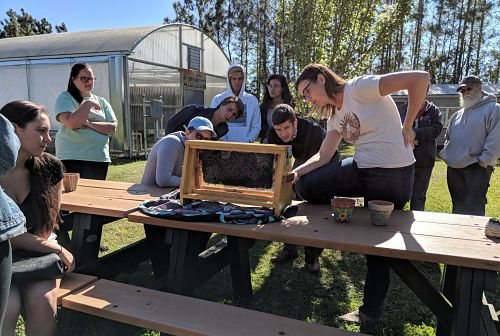Bee Workshop
